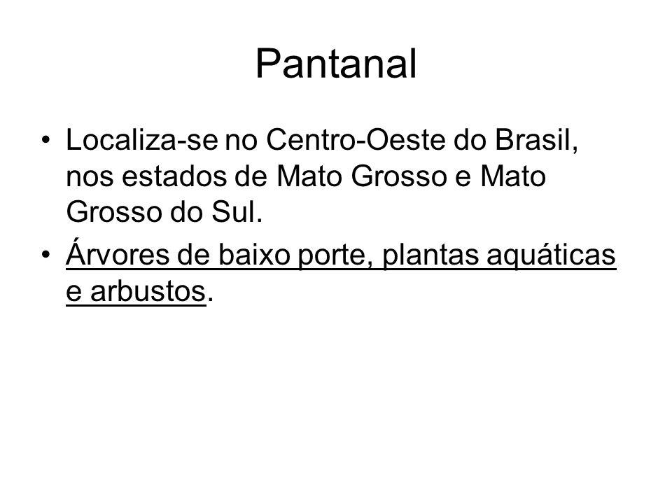 Pantanal Localiza-se no Centro-Oeste do Brasil, nos estados de Mato Grosso e Mato Grosso do Sul. Árvores de baixo porte, plantas aquáticas e arbustos.