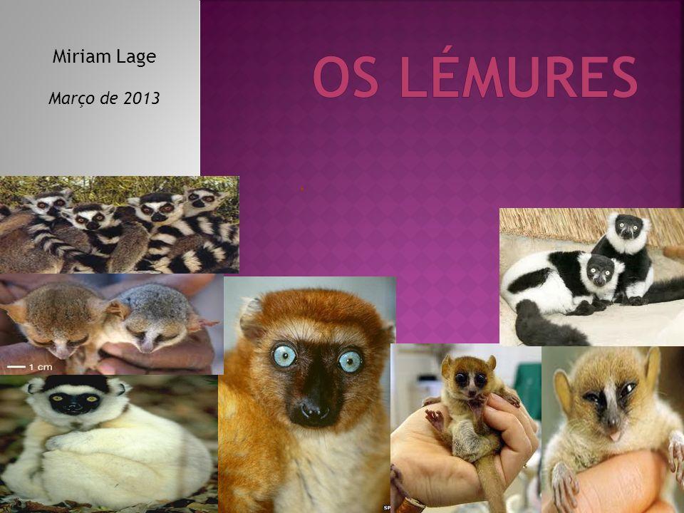 Os lémures pertencem ao grupo dos animais vertebrados, pois possuem um esqueleto interno.
