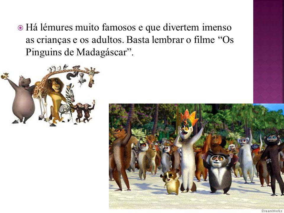 Há lémures muito famosos e que divertem imenso as crianças e os adultos.