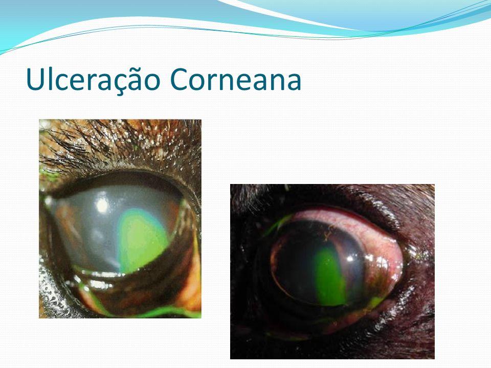 Ulceração Corneana