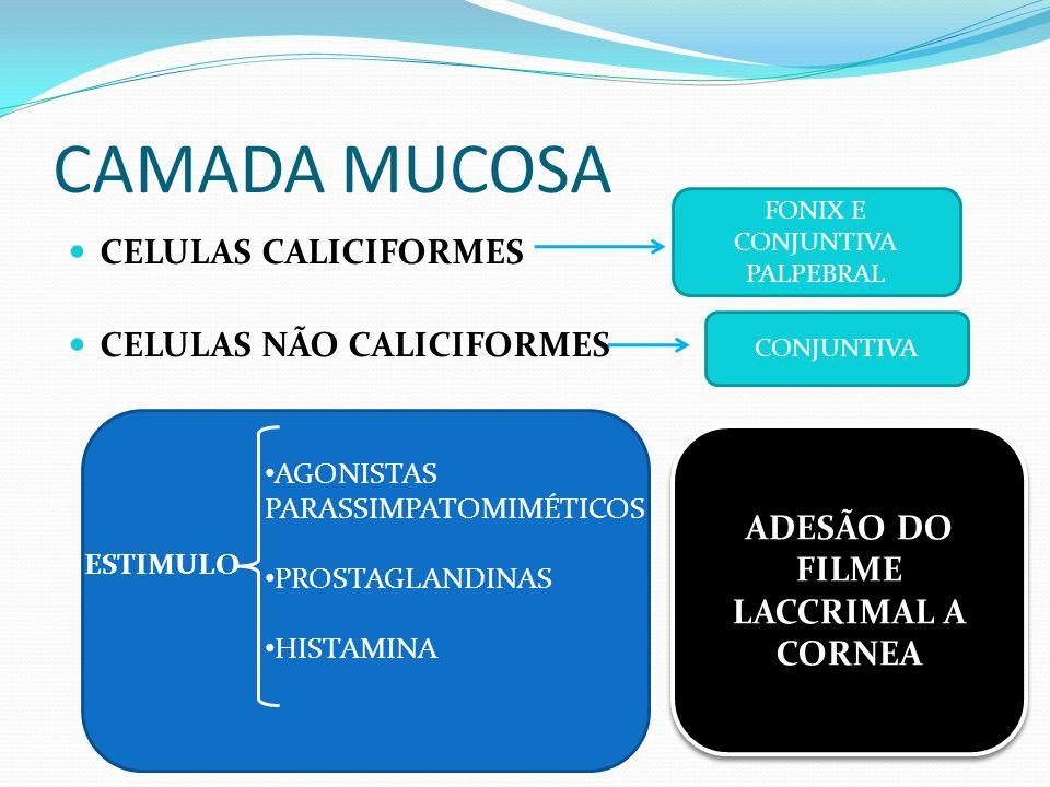 CAMADA AQUOSA Glândula lacrimal = 60% Glândula da terceira pálpebra = 40% Fluidez à lagrima CAMADA LIPÍDICA Glândulas tarsais Evita a evaporação Evitar o extravasamento (tensão superficial)