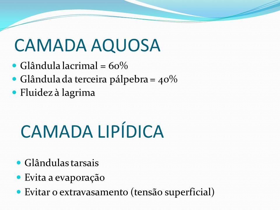 CAMADA AQUOSA Glândula lacrimal = 60% Glândula da terceira pálpebra = 40% Fluidez à lagrima CAMADA LIPÍDICA Glândulas tarsais Evita a evaporação Evita