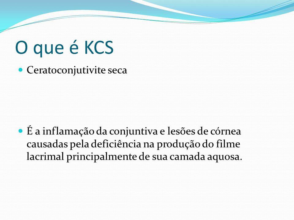 O que é KCS Ceratoconjutivite seca É a inflamação da conjuntiva e lesões de córnea causadas pela deficiência na produção do filme lacrimal principalme