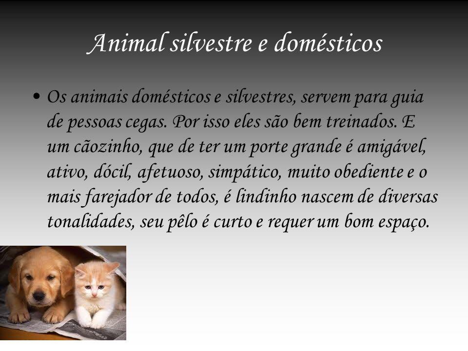 Animal silvestre e domésticos Os animais domésticos e silvestres, servem para guia de pessoas cegas. Por isso eles são bem treinados. E um cãozinho, q