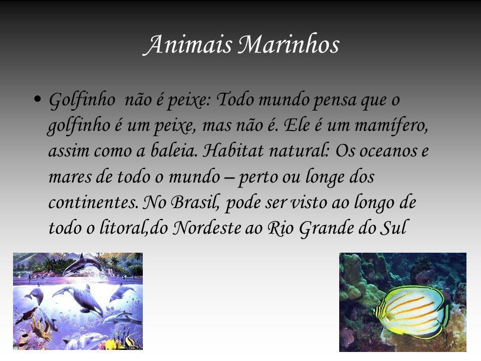 Animais Marinhos Golfinho não é peixe: Todo mundo pensa que o golfinho é um peixe, mas não é. Ele é um mamífero, assim como a baleia. Habitat natural:
