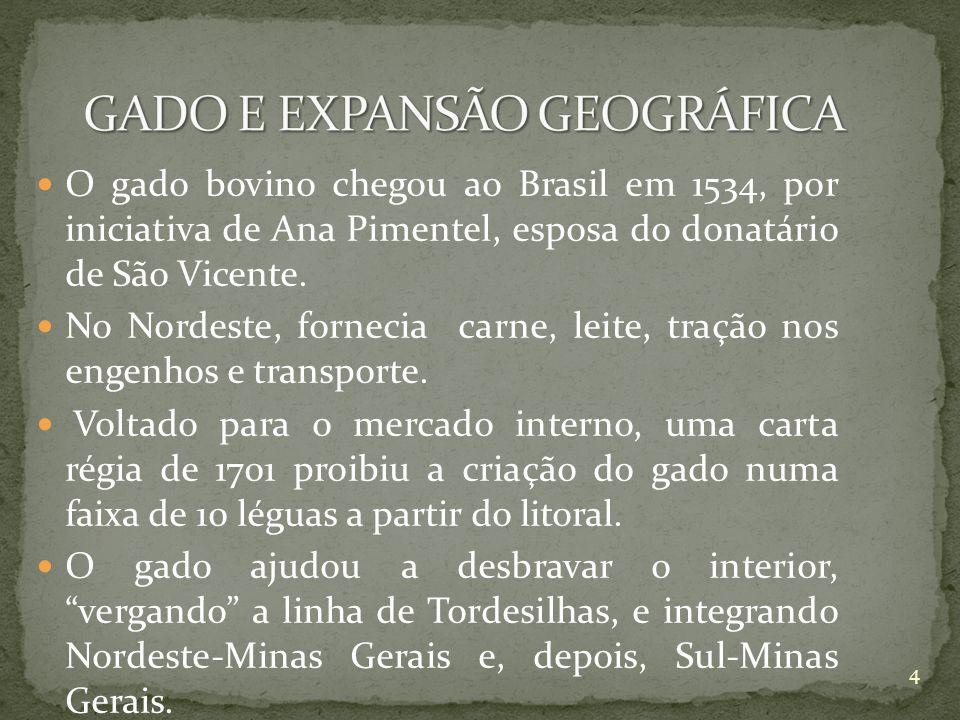 O gado bovino chegou ao Brasil em 1534, por iniciativa de Ana Pimentel, esposa do donatário de São Vicente. No Nordeste, fornecia carne, leite, tração