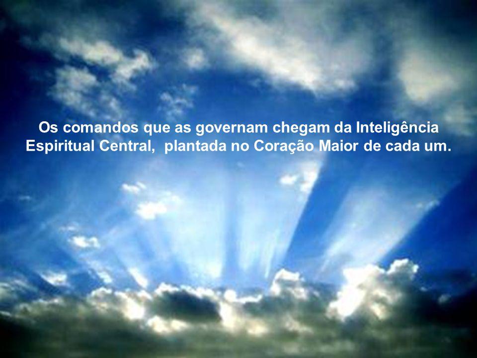 Com o poder de seus corações e mentes, seguem com alegria e paixão, inteligentemente, e armadas de compaixão e do mais puro discernimento.