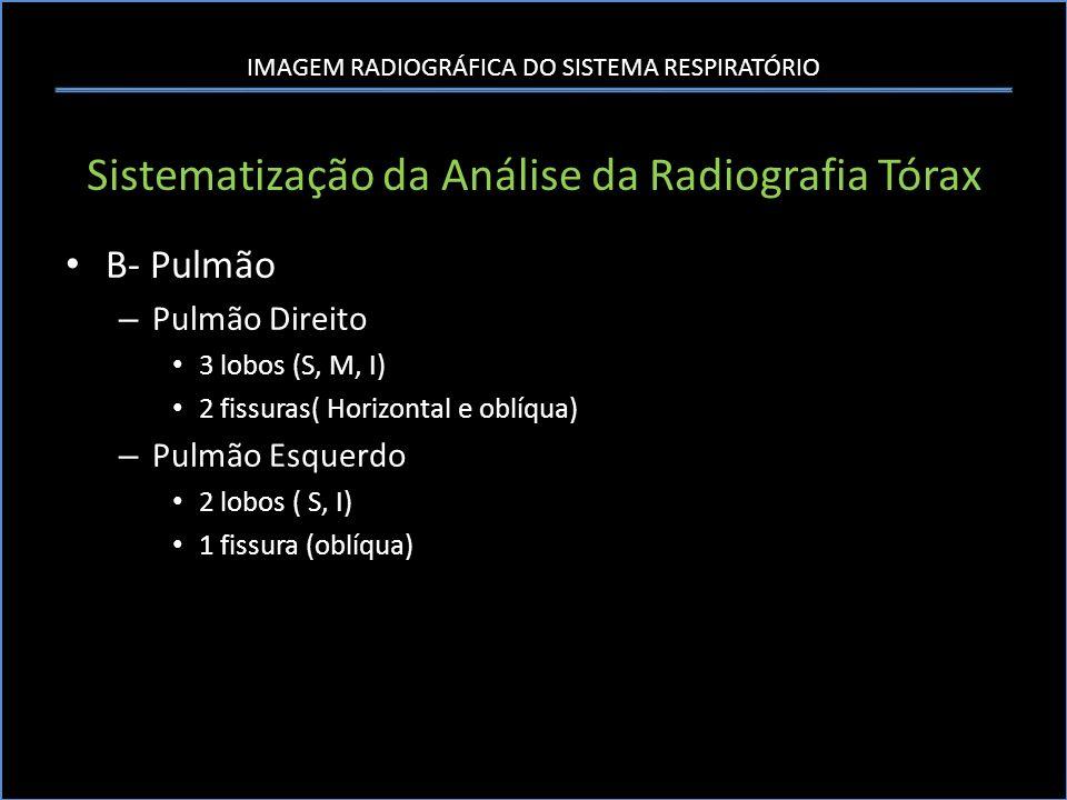 IMAGEM RADIOGRÁFICA DO SISTEMA RESPIRATÓRIO Sistematização da Análise da Radiografia Tórax B- Pulmão – Pulmão Direito 3 lobos (S, M, I) 2 fissuras( Ho