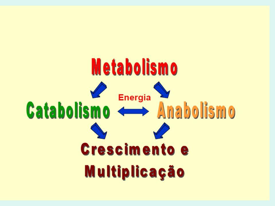 Microaerófilas – Crescimento aeróbio, porém, em baixas concentrações de O2 Ex: Campylobacter