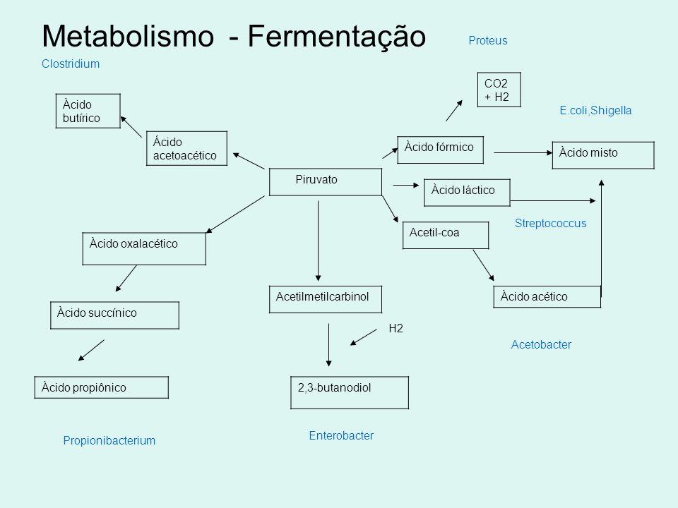 Metabolismo - Fermentação Clostridium Piruvato Ácido acetoacético Àcido butírico Àcido fórmico Àcido láctico Acetil-coa Àcido acético CO2 + H2 Àcido m