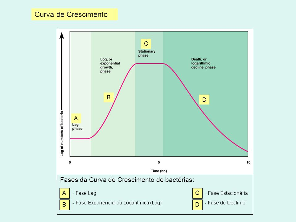 Curva de Crescimento A D B C Fases da Curva de Crescimento de bactérias: - Fase Lag - Fase Estacionária - Fase Exponencial ou Logaritmica (Log) - Fase