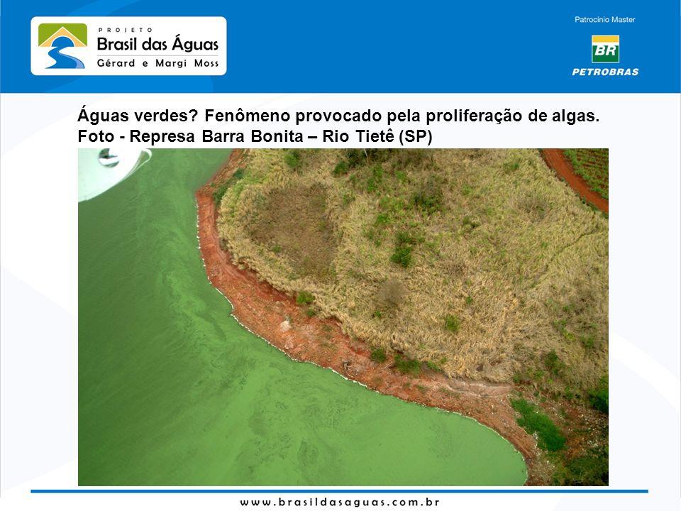 Águas verdes? Fenômeno provocado pela proliferação de algas. Foto - Represa Barra Bonita – Rio Tietê (SP)