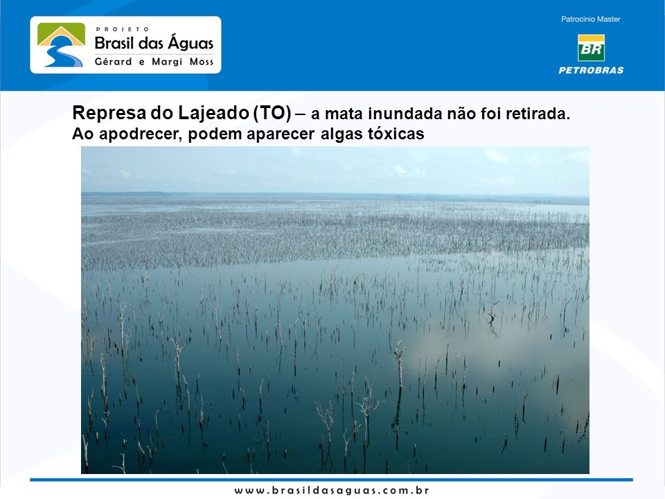 Represa do Lajeado (TO) – a mata inundada não foi retirada. Ao apodrecer, podem aparecer algas tóxicas