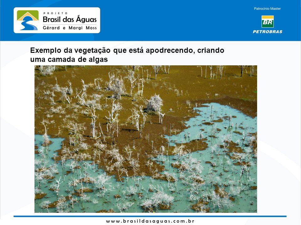 Exemplo da vegetação que está apodrecendo, criando uma camada de algas
