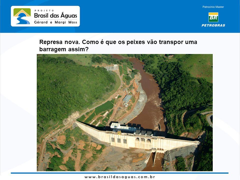 Represa nova. Como é que os peixes vão transpor uma barragem assim?