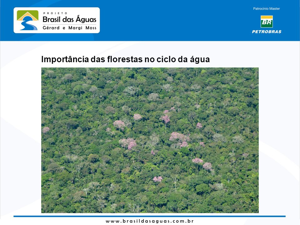 Importância das florestas no ciclo da água