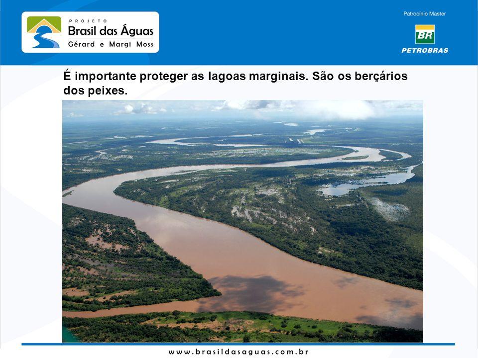 É importante proteger as lagoas marginais. São os berçários dos peixes.