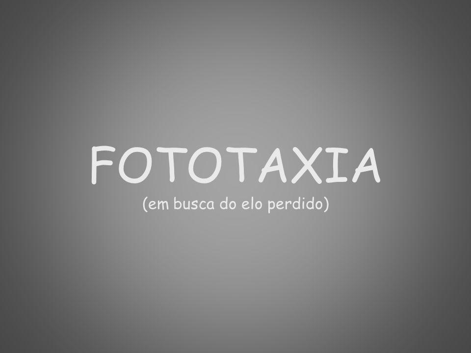 FOTOTAXIA (em busca do elo perdido)