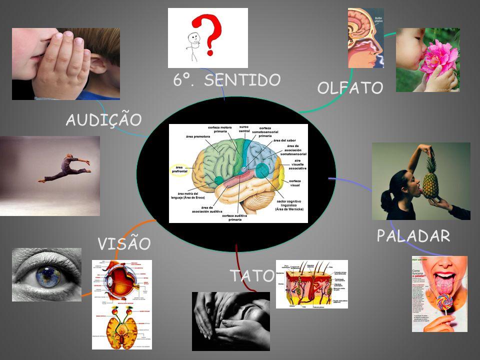 VISÃO PALADAR TATO OLFATO AUDIÇÃO 6º. SENTIDO