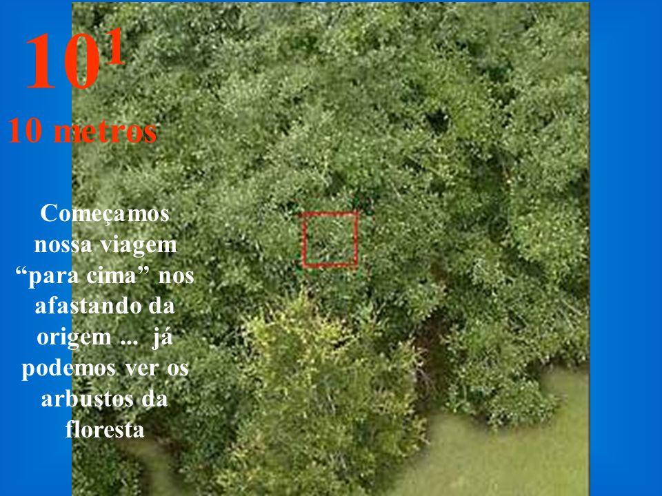 É a distância de olharmos um ramo de folhas com o braço esticado... 10 0 1 metro