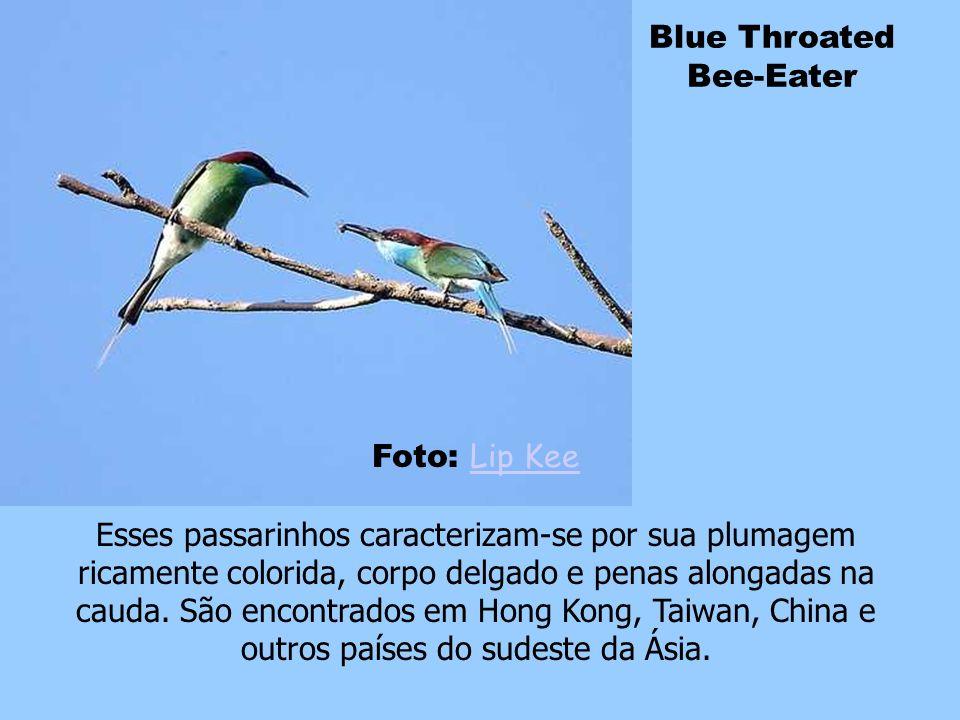 Currupião Foto: Peter Meenen Peter Meenen O currupião é o pássaro nacional da Venezuela. Ele constrói seu ninho em cactos elevados mas pode também apr