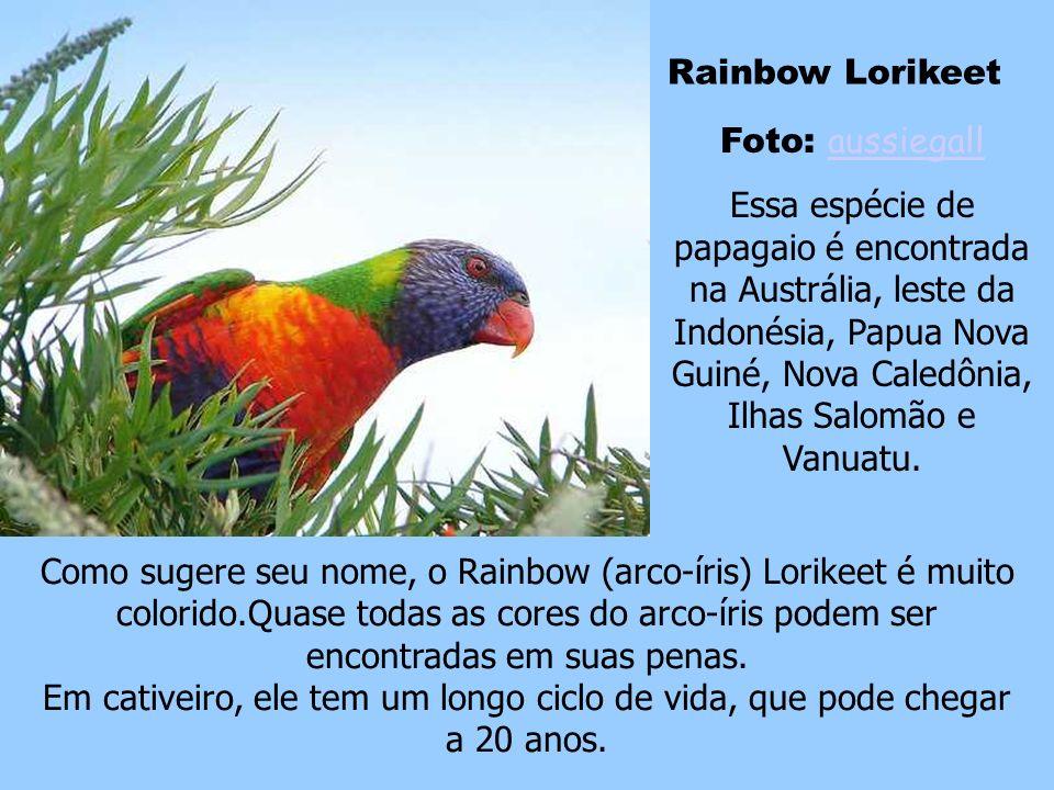 Tucano de Bico Arco-Íris Foto: Dan Irizarry Dan Irizarry Esse é considerado o pássaro nacional de Belize e o que chama mais atenção é seu grande bico