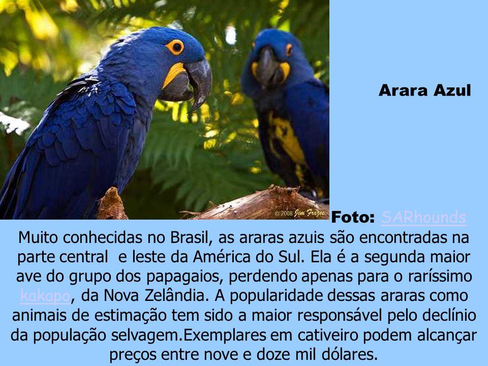 Ave-do-Paraíso Foto: ImageMD ImageMD A ave-do-paraíso pode ser encontrada nas regiões tropicais do Norte da Austrália, Nova Guiné, Indonésia e Ilhas M