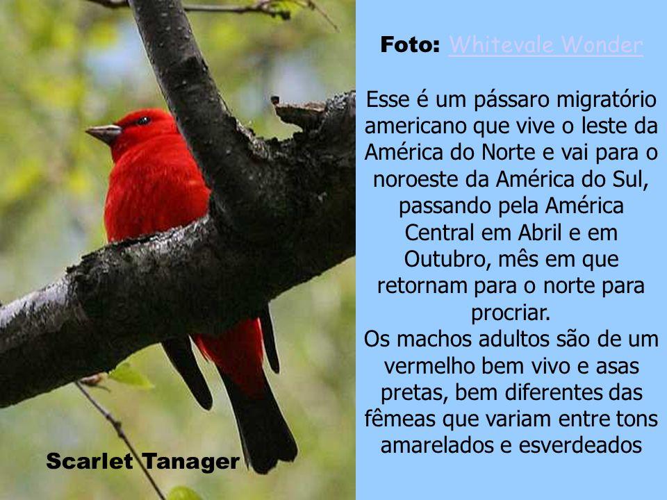 Flamingo Foto: Marco (É nóis no Flickr!) Marco Os flamingos são encontrados em ambos os hemisférios, leste e oeste. Esses pássaros freqüentemente fica