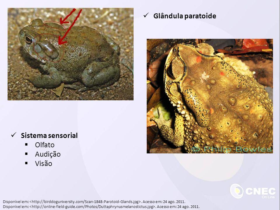 Disponível em:. Acesso em: 24 ago. 2011. Glândula paratoide Sistema sensorial Olfato Audição Visão