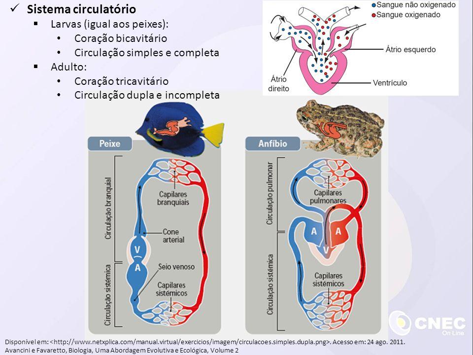 Disponível em:. Acesso em: 24 ago. 2011. Avancini e Favaretto, Biologia, Uma Abordagem Evolutiva e Ecológica, Volume 2 Sistema circulatório Larvas (ig