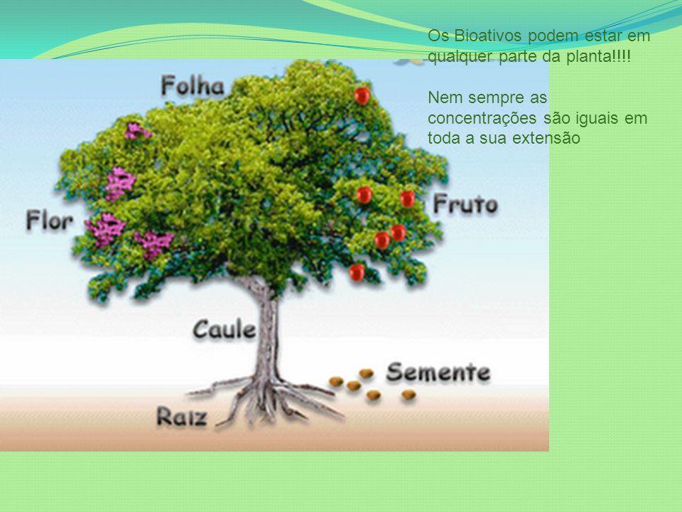 Os Bioativos podem estar em qualquer parte da planta!!!! Nem sempre as concentrações são iguais em toda a sua extensão
