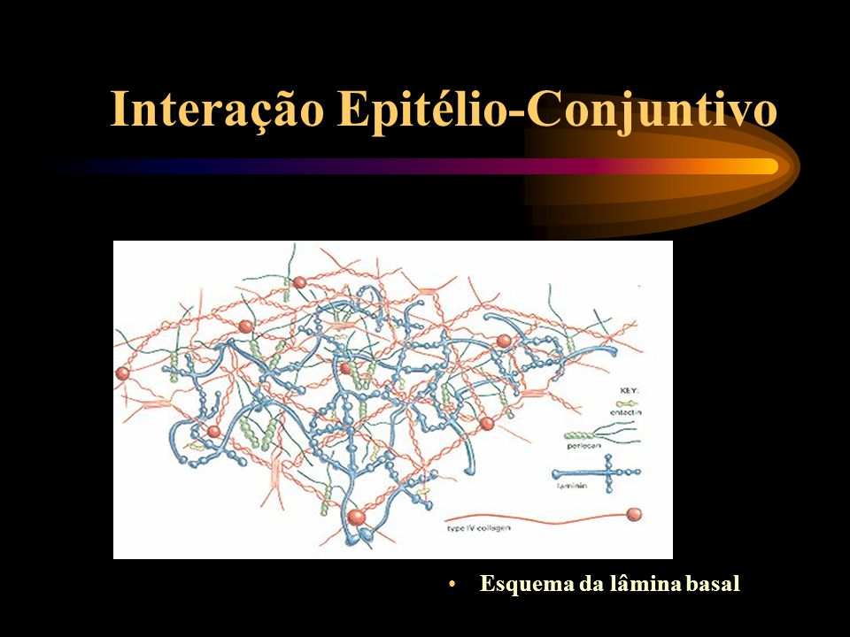 Interação Epitélio-Conjuntivo Apresentador: André Oliveira de Carvalho