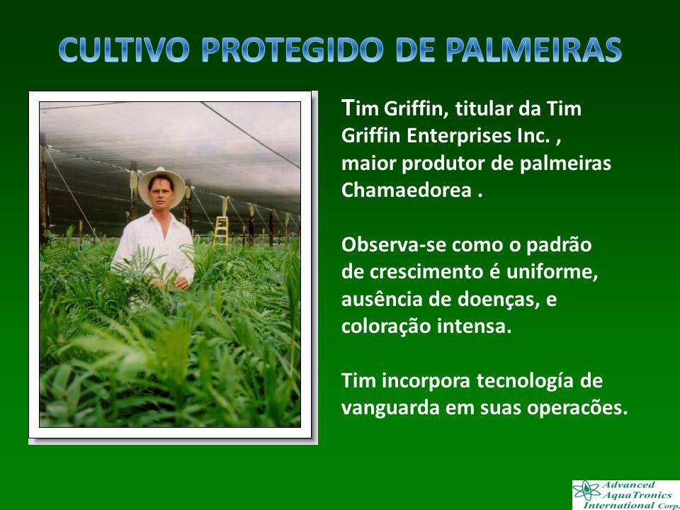 T im Griffin, titular da Tim Griffin Enterprises Inc., maior produtor de palmeiras Chamaedorea. Observa-se como o padrão de crescimento é uniforme, au