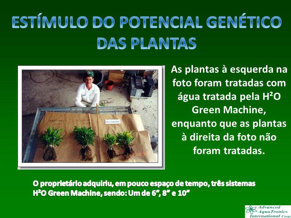 As plantas à esquerda na foto foram tratadas com água tratada pela H²O Green Machine, enquanto que as plantas à direita da foto não foram tratadas..