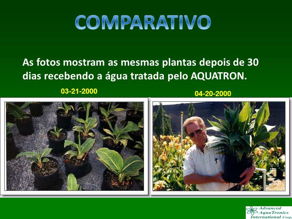 As fotos mostram as mesmas plantas depois de 30 dias recebendo a água tratada pelo AQUATRON. 04-20-2000 03-21-2000