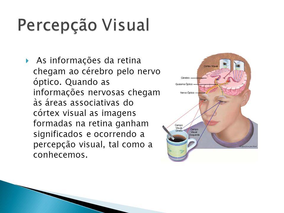 As informações da retina chegam ao cérebro pelo nervo óptico. Quando as informações nervosas chegam às áreas associativas do córtex visual as imagens