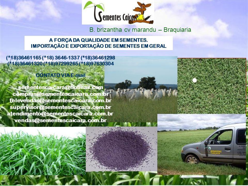 Deseja ter resultado nunca obtido passe a plantar as nossas sementes de pastagem aqui a qualidade esta acima de tudo.