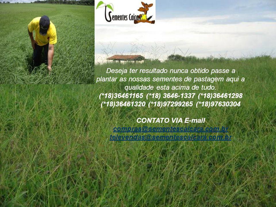 Deseja ter resultado nunca obtido passe a plantar as nossas sementes de pastagem aqui a qualidade esta acima de tudo. (*18)36461165 (*18) 3646-1337 (*