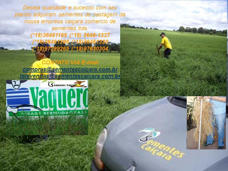 Deseja qualidade e sucesso com seu plantio adquiram sementes de pastagem da nossa empresa caiçara comercio de sementes ltda. (*18)36461165 (*18) 3646-