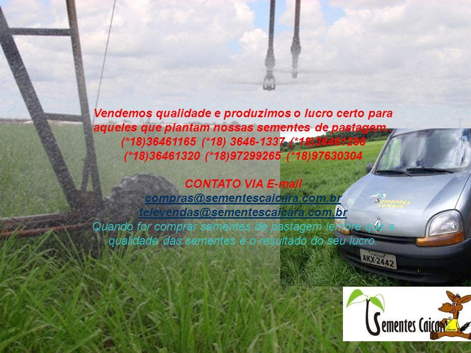 Vendemos qualidade e produzimos o lucro certo para aqueles que plantam nossas sementes de pastagem.. (*18)36461165 (*18) 3646-1337 (*18)36461298 (*18)