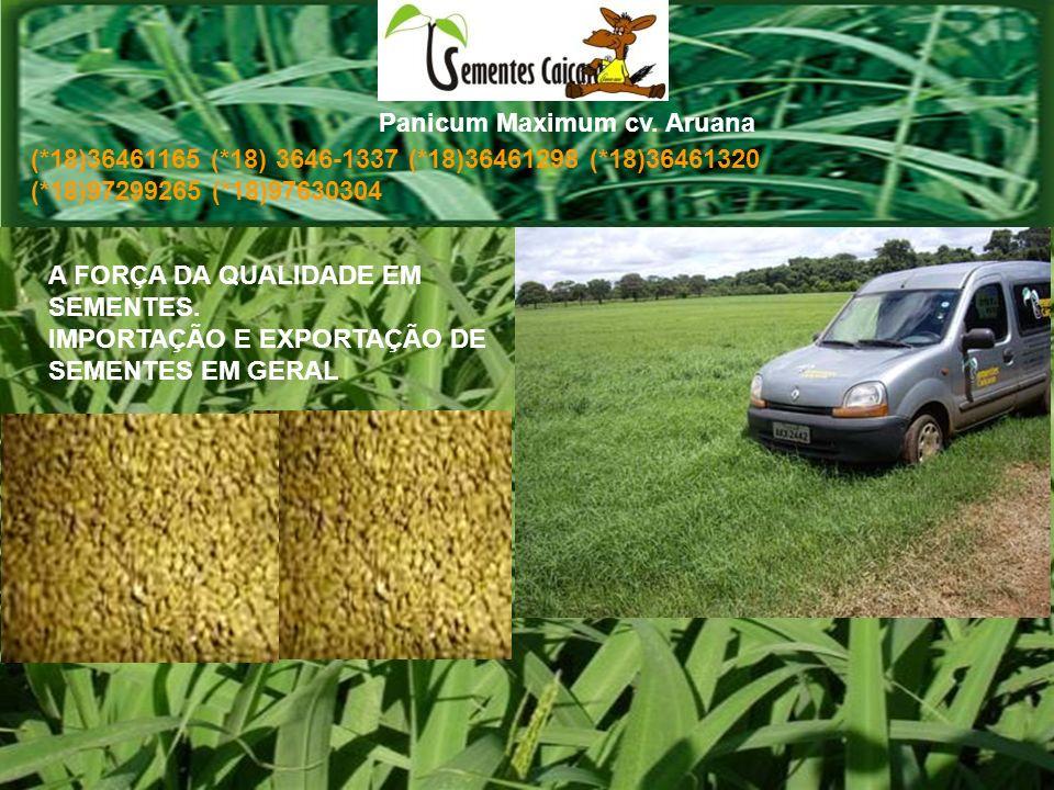 Espécie: Panicum maximum Cultivar: Aruana A FORÇA DA QUALIDADE EM SEMENTES.