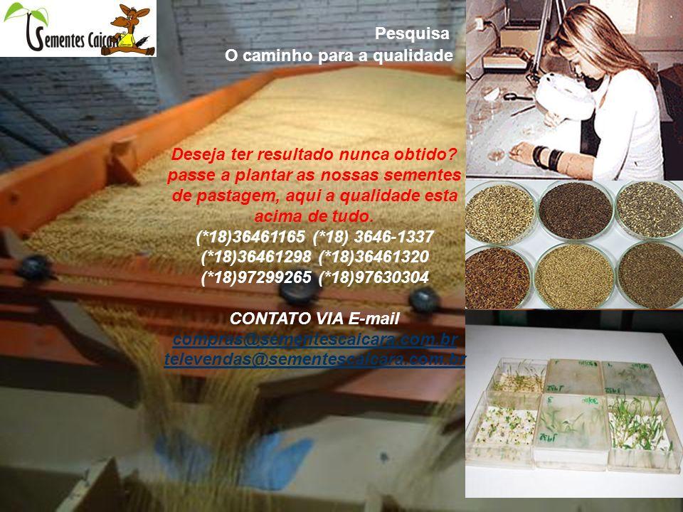 Deseja qualidade e sucesso com seu plantio adquiram sementes de pastagem da nossa empresa caiçara comercio de sementes ltda.