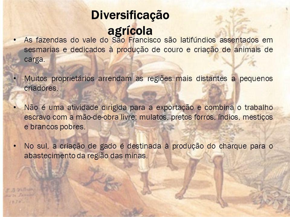 Diversificação agrícola As fazendas do vale do São Francisco são latifúndios assentados em sesmarias e dedicados à produção de couro e criação de animais de carga.