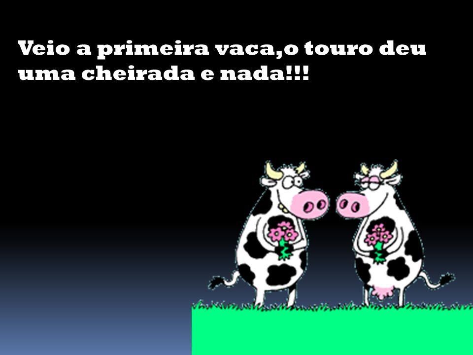 Os fazendeiros trouxeram suas vacas para o touro cobrir,tudo de graça!!!