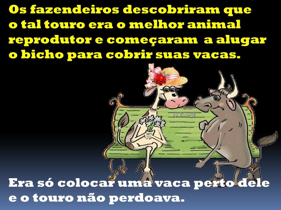 Os fazendeiros descobriram que o tal touro era o melhor animal reprodutor e começaram a alugar o bicho para cobrir suas vacas.