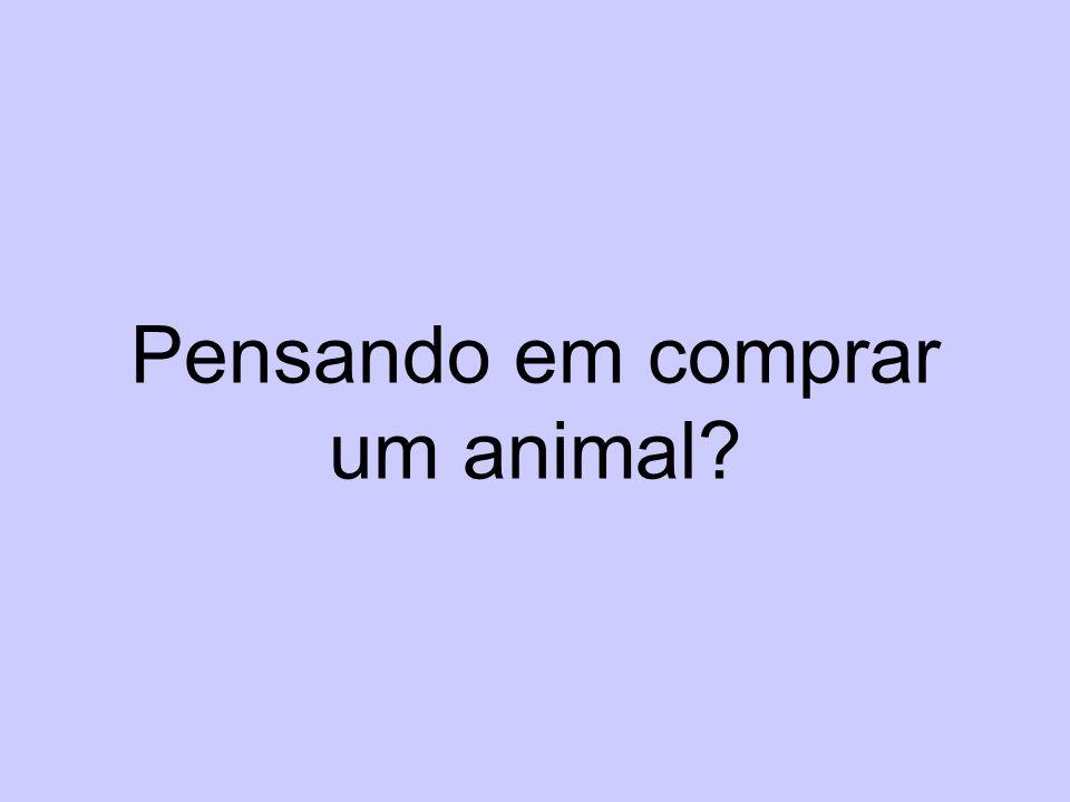 Pensando em comprar um animal?