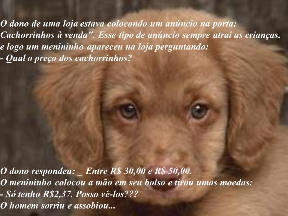O dono de uma loja estava colocando um anúncio na porta: Cachorrinhos à venda