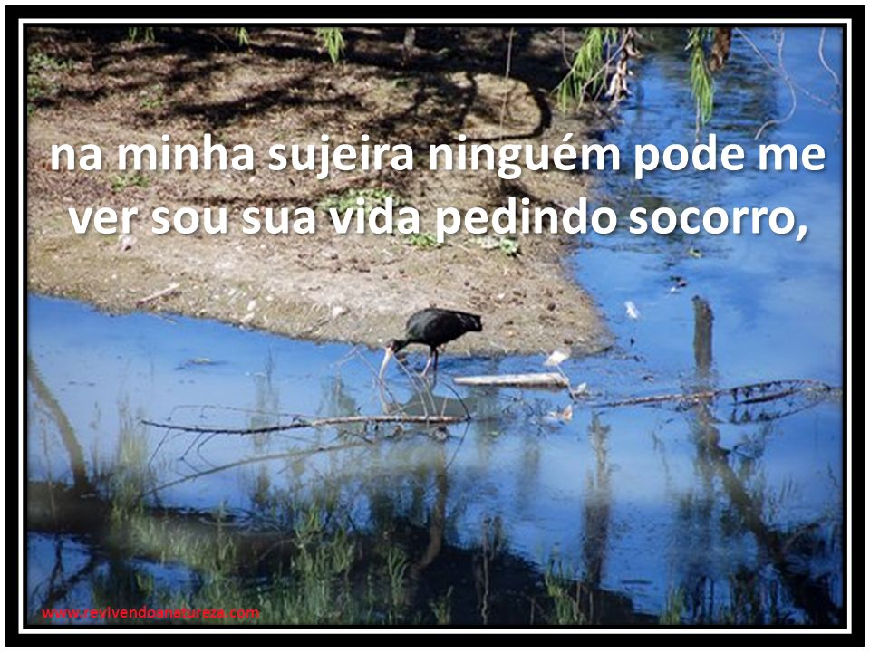 na minha sujeira ninguém pode me ver sou sua vida pedindo socorro, na minha sujeira ninguém pode me ver sou sua vida pedindo socorro, www.revivendoanatureza.com