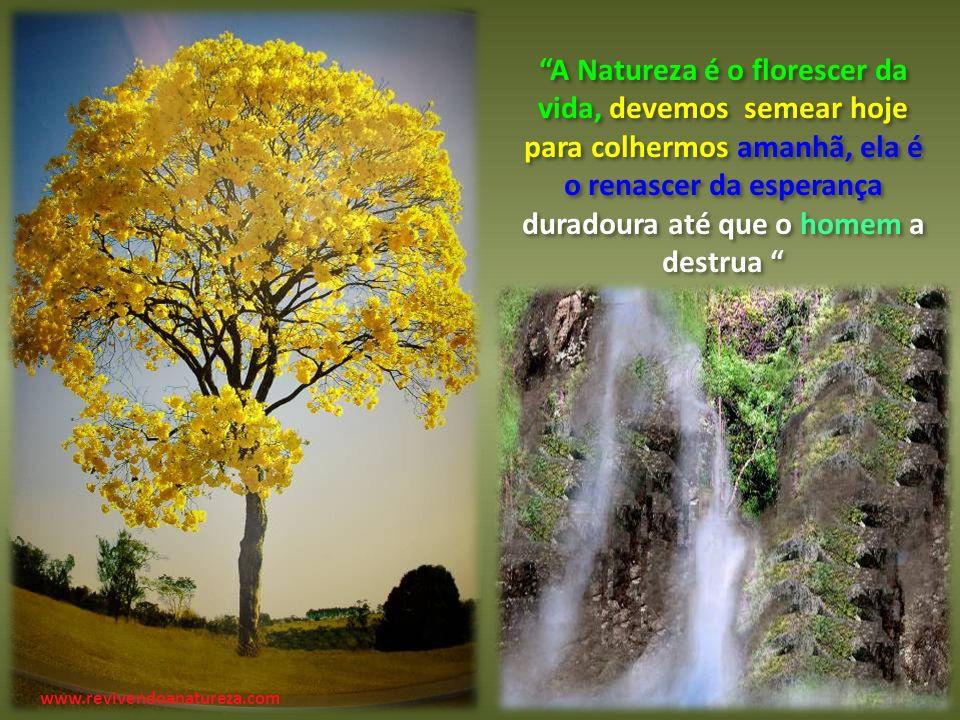 A Natureza é o florescer da vida, devemos semear hoje para colhermos amanhã, ela é o renascer da esperança duradoura até que o homem a destrua A Natureza é o florescer da vida, devemos semear hoje para colhermos amanhã, ela é o renascer da esperança duradoura até que o homem a destrua www.revivendoanatureza.com