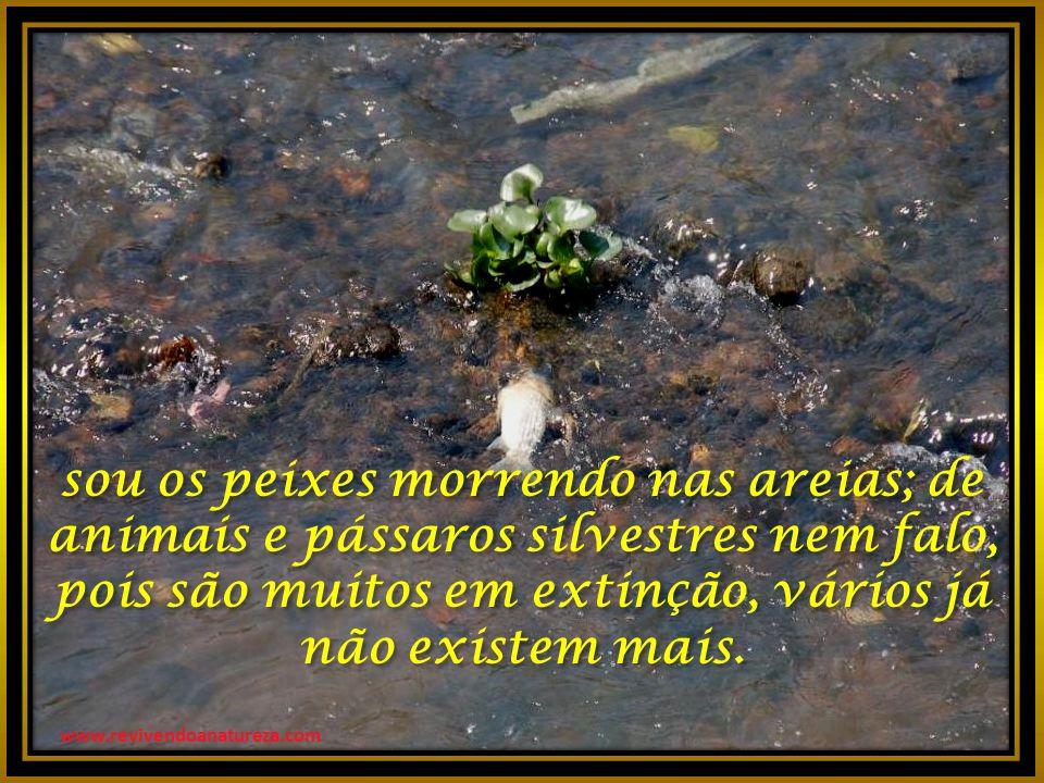 www.revivendoanatureza.com sou os peixes morrendo nas areias; de animais e pássaros silvestres nem falo, pois são muitos em extinção, vários já não existem mais.